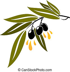 Black olives on a branch dripping olive oil - Three ripe...
