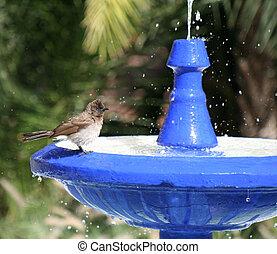 Bird Bath 8 - Bird bath 8