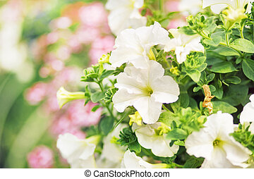 Flourish white flowers in the summer garden