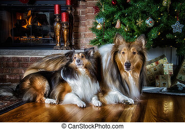 Christmas Ready - The dogs are waiting for their Christmas...