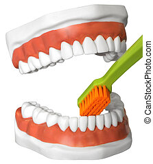 Teeth and toothbrush - The model of the human jaw with teeth...