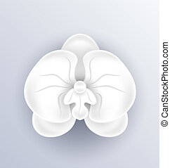Cutout flower - beautiful orchid, paper craft