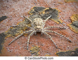 Small spider on a brown surface - Macrophoto of a small...