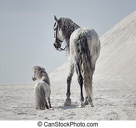 Great shot of the two horses on the desert