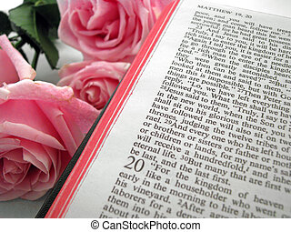 bible and rose - opened bible and pink roses book of Matthew