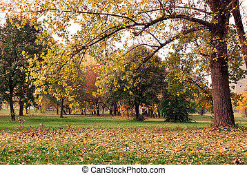 Autumn park - autumn tree with yellow leaves in park...