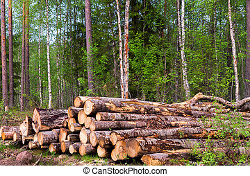 green forest summer - Pile of wood in forest summer...