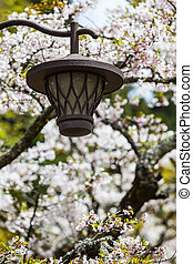 Sakura Lantern - Lampshade in the spring with cherry...