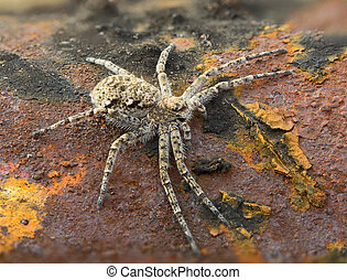 Macrophoto of spider on a rusty surface - Macrophoto of a...