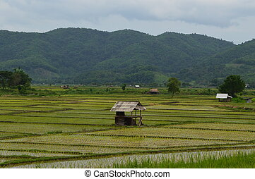 Bamboo hut in the rice fields - Bamoboo hut in the middle of...