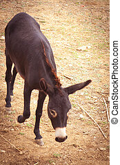 European donkey on the farm during daytime, artistic toned...