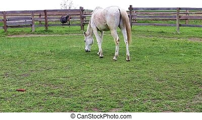 Horse in pen - Portrait view of a beautiful white horse with...