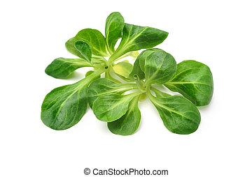 Corn salad leaves isolated on white. Valerianella locusta,...