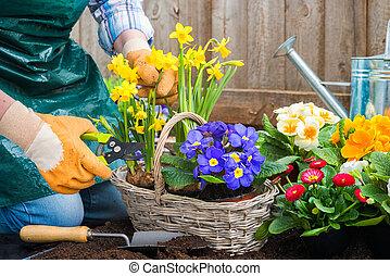 Gardener planting flowers