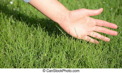 woman hand dew grass - Human feel nature Woman hand touch...