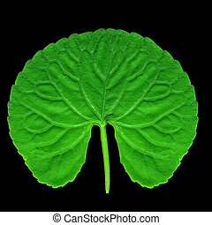 Rounded green leaf with wavy line of edge, isolated on black...