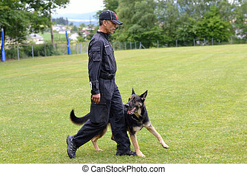 Schaefer geht bei Hundetrainer Fuss - Shepherd goes in dog...