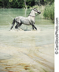 Picture of the horse in the pool - Picture of the white...