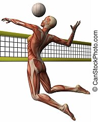 Female Anatomic Body - Volleyball - 3D Render of an Female...