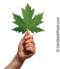 Holding A Leaf - Holding a leaf as a symbol of growth and...