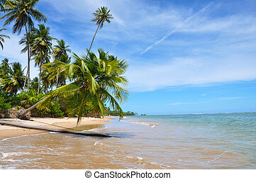 Palm Tree, Blue Lonley Beach Brazil, Salvador Bahia....