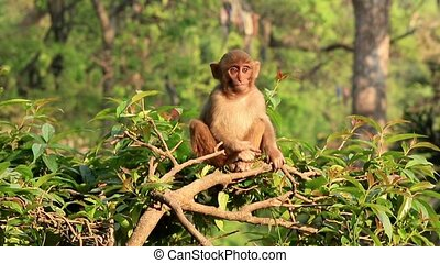 Macaque monkey on a tree