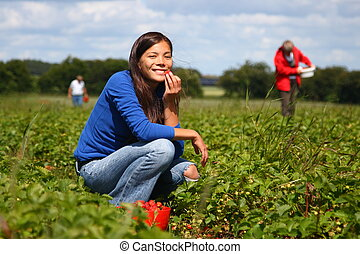 Picking strawberries - Beautiful woman eating a strawberry...