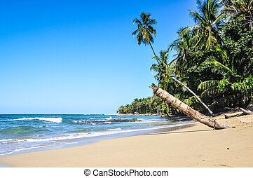 Perfect jungle beach - Perfect beach next to a unspoiled...