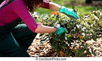 Gardener trimming the bushes