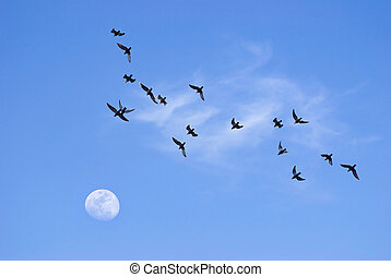 Birds flying toward the moon in the evening
