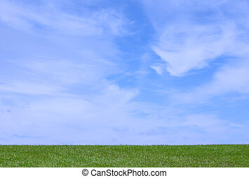 Pretty blue sky with green grass on a sunny day