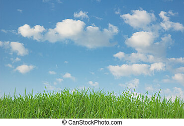 Green Grass and Blue Sky - Image of Green grass and blue sky...