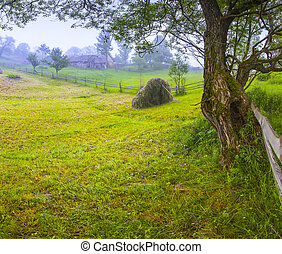 Haymaking in a Carpathian village Ukraine, Europe...