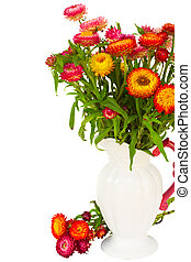 Everlasting flowers in vase - fresh Everlasting colorful...