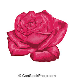 beautiful red rose with the effect of a watercolor drawing isolated on white