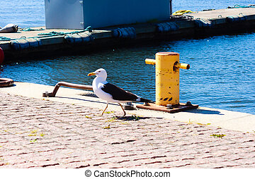 Proud seagull in port