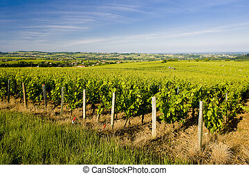 Burgundy - vineyards of C�te M�connais region near...