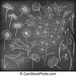 Hand drawn flowers Collection of various hand drawn flowers...