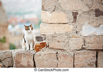 Domestic cat in the village. Turkey