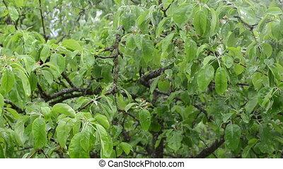 panorama water fall tree - closeup of rain water drops fall...