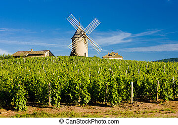 Beaujolais - vineyards with windmill near Ch�nas,...