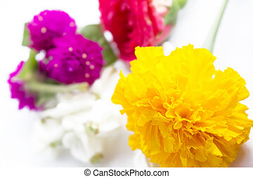 Flower - rose ,marigold, crown flower ,amaranth is flower...