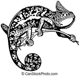chameleon black white - chameleon lizard, black and white...