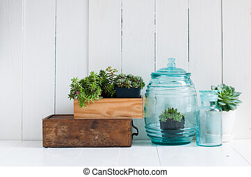 Vintage home decor: houseplants, green succulents, old...
