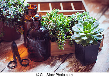 House plants and bottles - House plants, green succulents,...