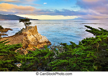 Cypress tree - Lone Cypress tree, 17 mile drive California