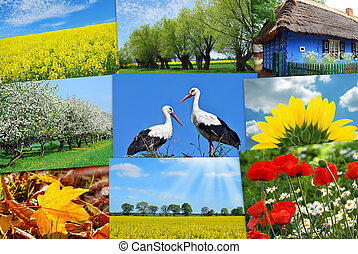 beauty of Poland-collage