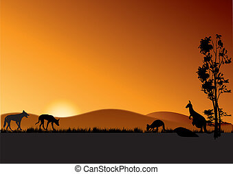 dingo and kangaroos in sunset - two dingos and kangaroos in...