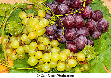 Bunch of grapes, - Grapes are a genus of plants in the...