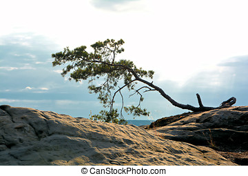 the Harz National Park - tree on a rock in the Harz National...